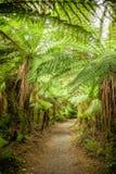 雨林道路在新西兰 免版税库存照片