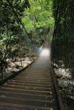 雨林道路 免版税库存照片