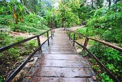 雨林,墨西哥 库存照片