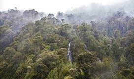 雨林, Carretera Australl,智利。 免版税图库摄影