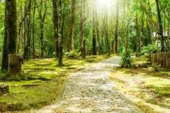 雨林 免版税图库摄影