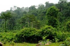雨林 库存照片