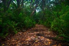 雨林 库存图片