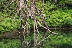 雨林Rockpool 图库摄影