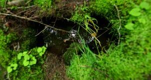 雨水水坑在有树和天空的反射的一个森林里 股票视频