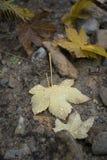 雨水滴在下落的叶子的 图库摄影