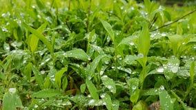 雨水滴在草的 免版税库存照片