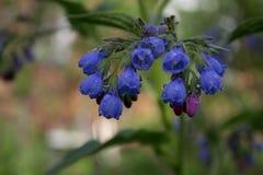 雨水滴在蓝色的 免版税库存照片