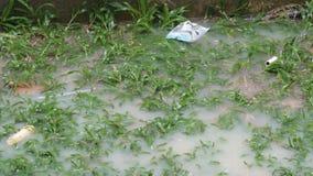 雨水滴滴下在大水坑上 热带降雨量在泰国 股票录像