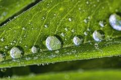 雨水的大滴 免版税库存图片