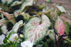 雨珠盖的大叶子 免版税库存照片