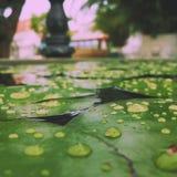 雨珠 库存图片