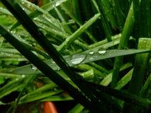 雨珠 免版税图库摄影