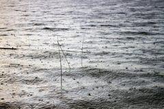 雨落湖的表面上 在水gr外面的棍子 免版税库存图片