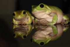 雨蛙家庭 库存照片