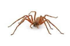 雨蜘蛛 免版税库存照片