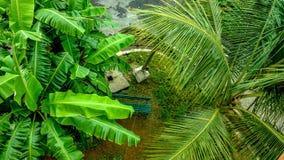 雨被洗涤的香蕉和棕榈树 免版税库存照片