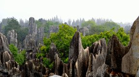 雨,石森林 库存图片
