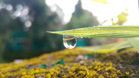 雨水唯一下落  免版税图库摄影