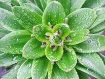 雨水滴在一棵美丽的植物的 免版税库存照片