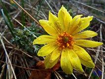 雨水滴在花亮光的 免版税库存图片