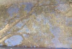 雨水坑反射树 免版税库存照片