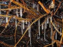 冻雨 用厚实的发光的冰和集成电路报道的树枝 库存图片
