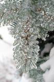 冻雨 免版税库存图片