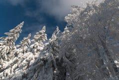 雪、结构树和天空 免版税库存照片