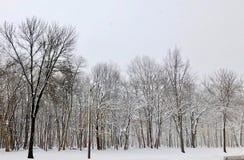 雪上漆的树丛 免版税图库摄影