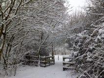 雪下落了 免版税图库摄影