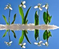 雪下落 免版税图库摄影