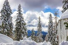 雪与山的被装载的树在背景中 库存照片
