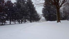 雪与常青树的风暴飞雪 与树地区的降雪的自然场面 风景斯诺伊北部的天气 影视素材