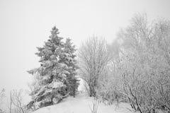 雪世界 库存图片