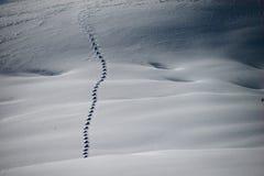 雪兔子的足迹横跨冬天小山的 免版税库存照片