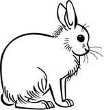 雪兔 皇族释放例证