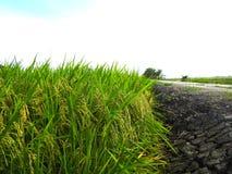 雪兰莪,马来西亚2017年11月15日:稻田鸟瞰图在Sungai Sireh,瓜拉雪兰莪的 免版税图库摄影