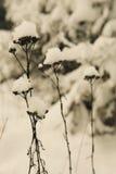 雪冠 库存图片