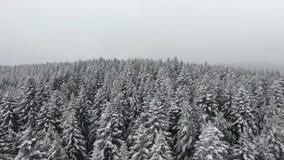 雪冬天季节 树森林森林 美好的本质 飞过 鸟瞰图 影视素材