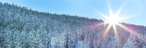 雪冬天杉树森林全景和太阳 免版税库存照片