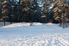 雪冬天森林 免版税图库摄影