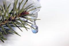 雪冻结的下落在具球果枝杈黏附了 库存照片