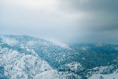 雪加盖了雾和云彩和树围拢的山 库存照片