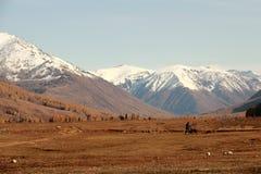 雪加盖的山,秋天草 免版税图库摄影