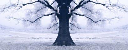 雪包围的黑色结构树在冬天 免版税库存照片