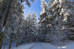 雪包括的山路 免版税图库摄影