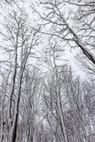 雪包括的结构树 库存图片