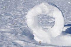 雪卷毛 免版税库存照片