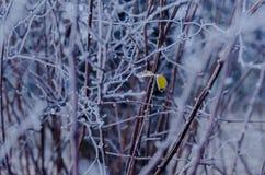 雪和光秃的分支在冬天围拢的两片冻叶子 库存图片